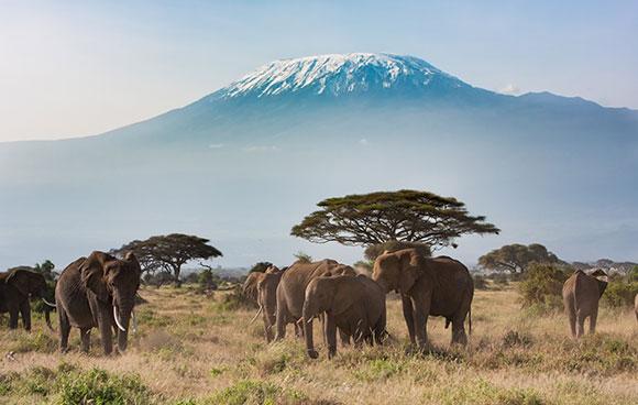 cache extrême Kilimandjaro