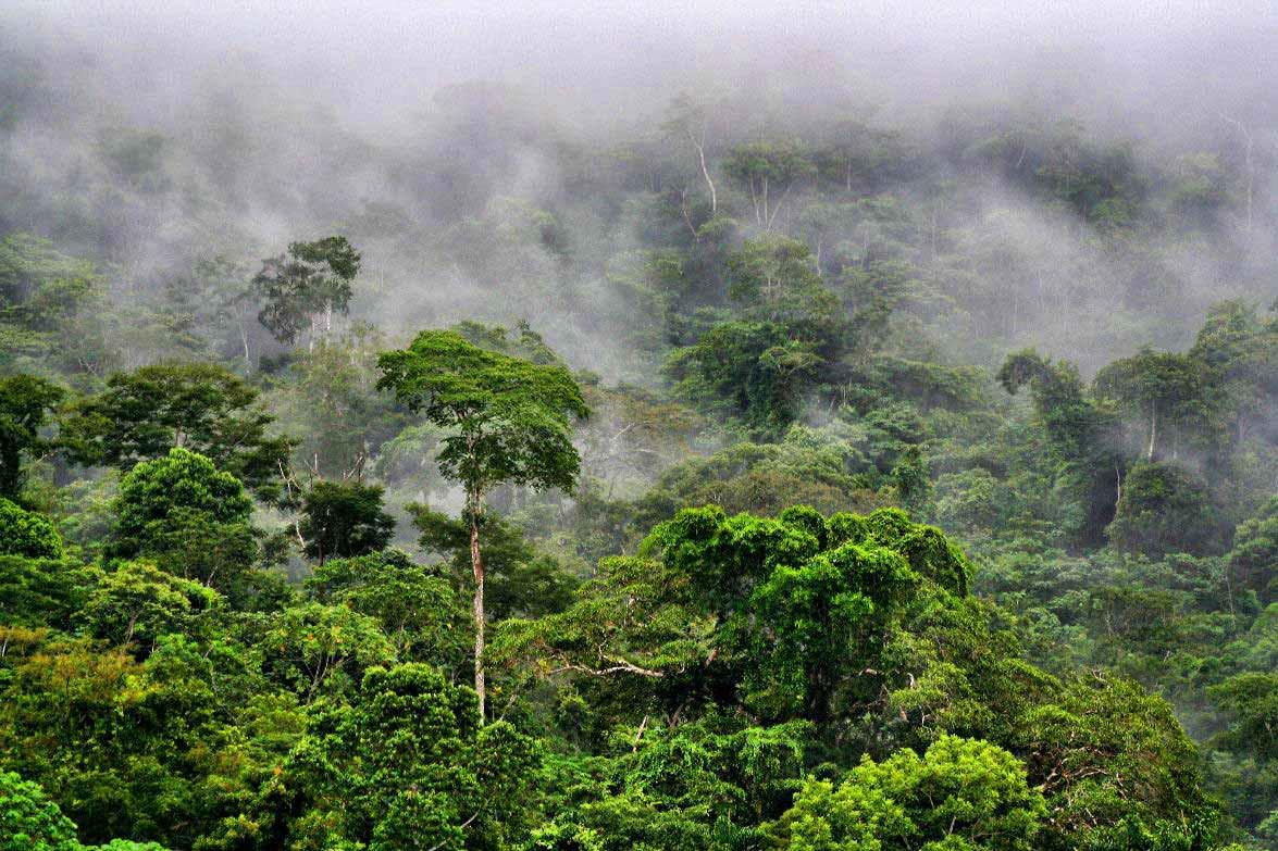 photos amazonie