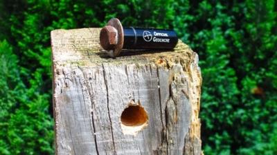 Caches originale plantée dans du bois